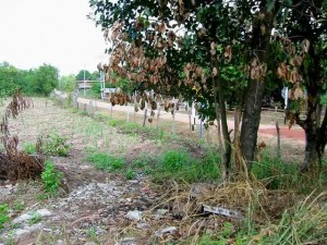 land for sale udon thani area at a concrete road in a quiet village