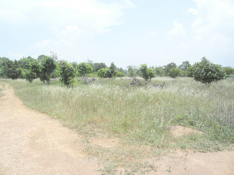 12 Rai plot of land in Pong, 3 min. from highway, 10 min. from Foodland, for Sale